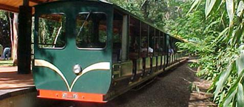 tren de la selva, misiones turismo, iguazu cataratas
